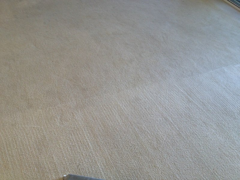 carpet steam cleaning results 14