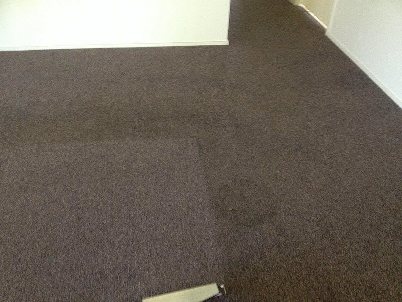 carpet steam cleaning results 3